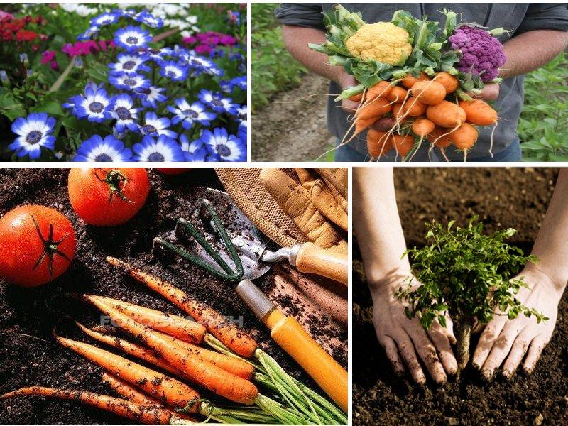 Why to start a garden