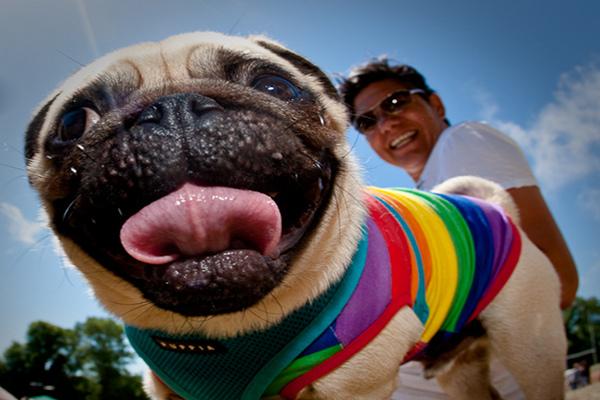 gay pride dog animal kingdom sexuality slideshow