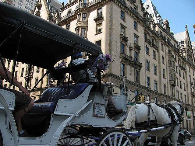 carriage horse dead manhattan charlie