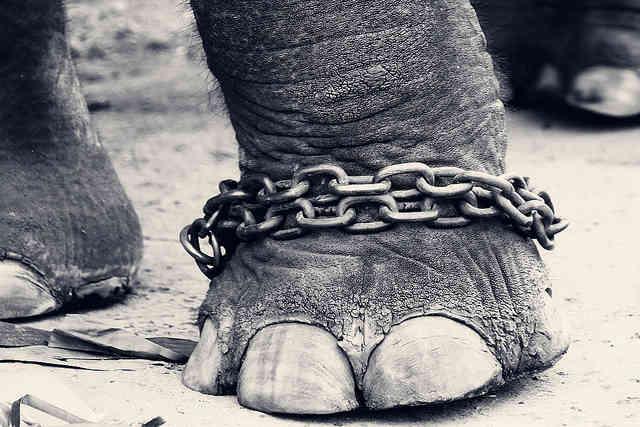 elephant circus ban bob barker