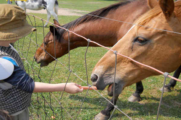 Compassionate Children: The Greatest Natural Resource for Animals
