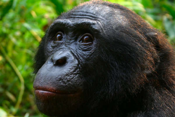 The World's Second Largest Rainforest: Congo