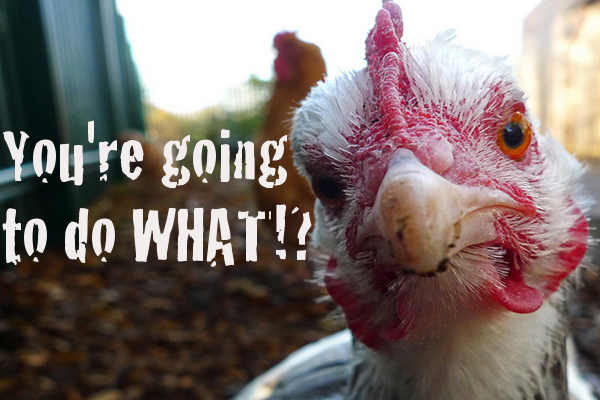 The Future of Humane Meat: Desensitized Chickens!