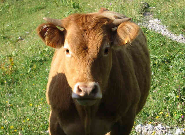 Farm Animal Angst: Decoding the Sustainable and Humane Meat Hysteria