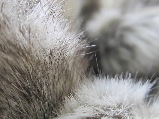 Fur Labeling Law in Full Effect