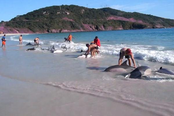 WATCH: Huge Dolphin Rescue on Brazilian Beach