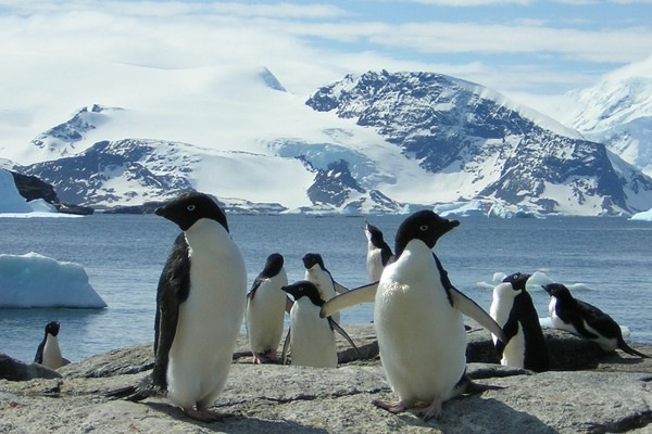 Scientists Count Emperor Penguins From Space, Find Twice as Many