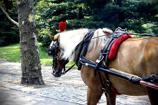 A Horse of a Different Color: Carriage Horses Are Neither War Horses Nor Work Horses