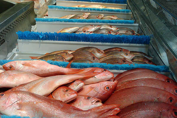 New Report Warns Against GM Soy Diets for Farmed Fish