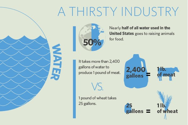 Infographic: Veganism and The Environment