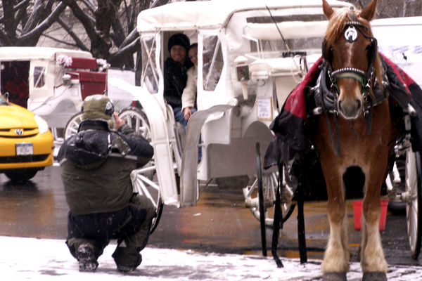 New York City Carriage Horses Never Have Happy Holidays