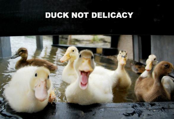 duck not delicacy