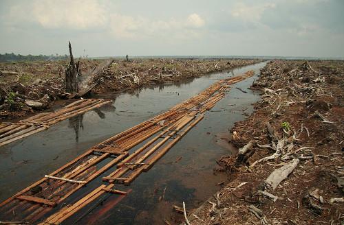carbon emissions palm oil
