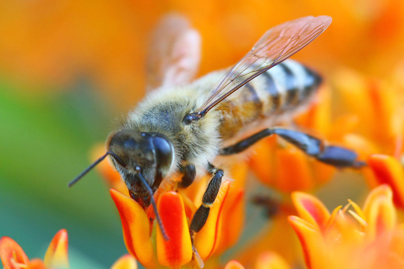 5 Easy Ways to Help the Bees
