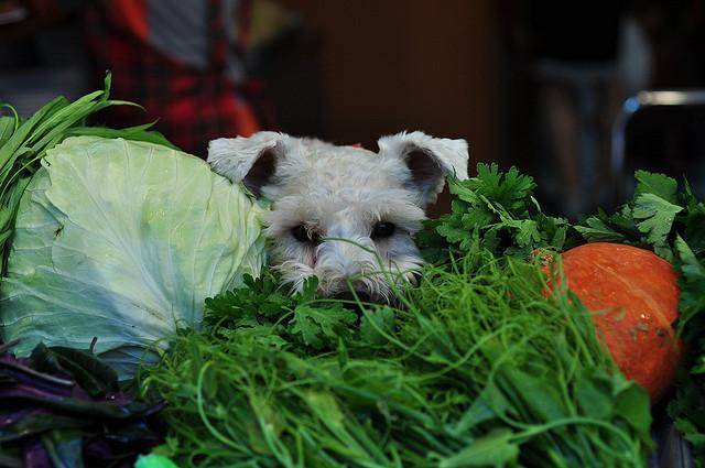 Adding Veggies to Your Dog's Diet