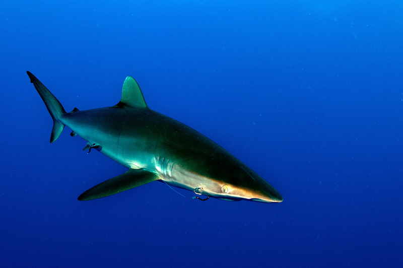 7 Alarming Facts about the Shark Fin Trade
