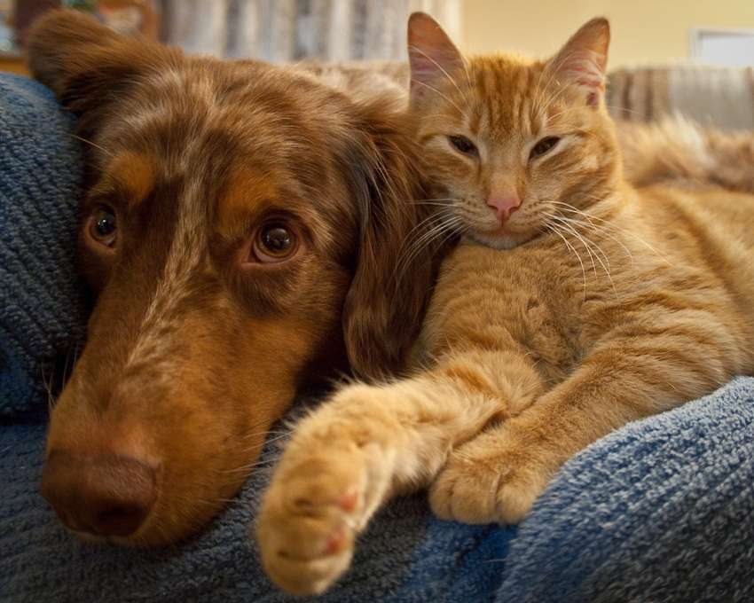 cat and dog_3