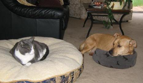 cat-steals-dog-bed