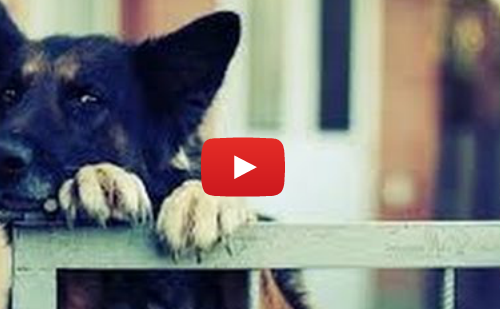 Funny Escaping Dogs (VIDEO)