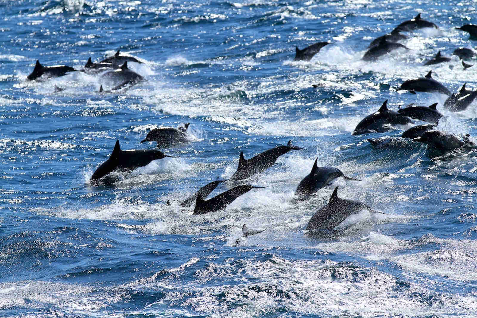 This is How We Should Experience Dolphins and Whales (VIDEO)