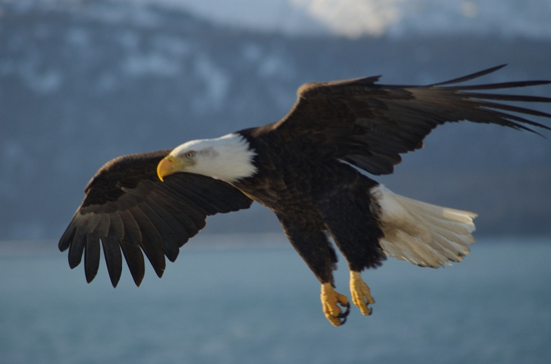 The Endangered Species Act Turns 40: Here are the Top 5 Big Wins!
