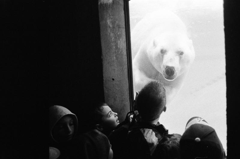 Polar Bear, Toronto Zoo, Canada, 2005