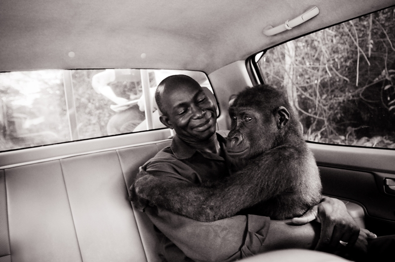 Appolinaire Mdohoudou and Pikin, Ape Action Africa, Cameroon, 2009