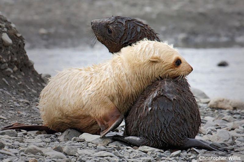 animals cuddling / Tumblr