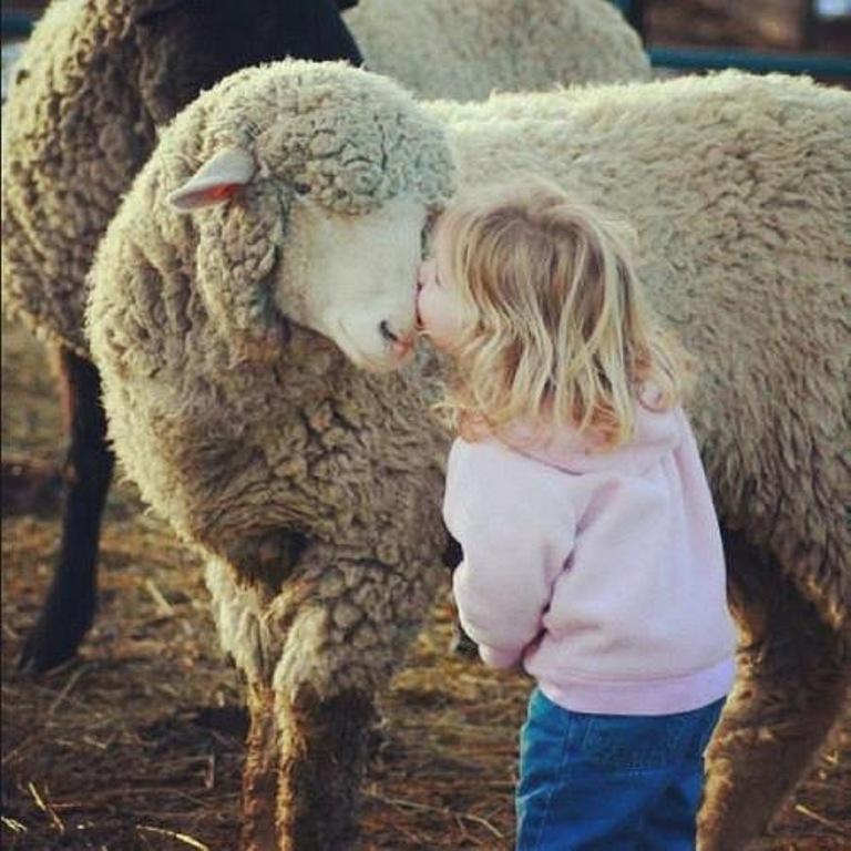12 Photos that Prove Farm Animals Love Us