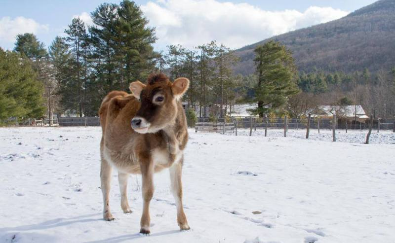 16 Photos of Rescued Farm Animals that Make Winter Weather Look Beautiful