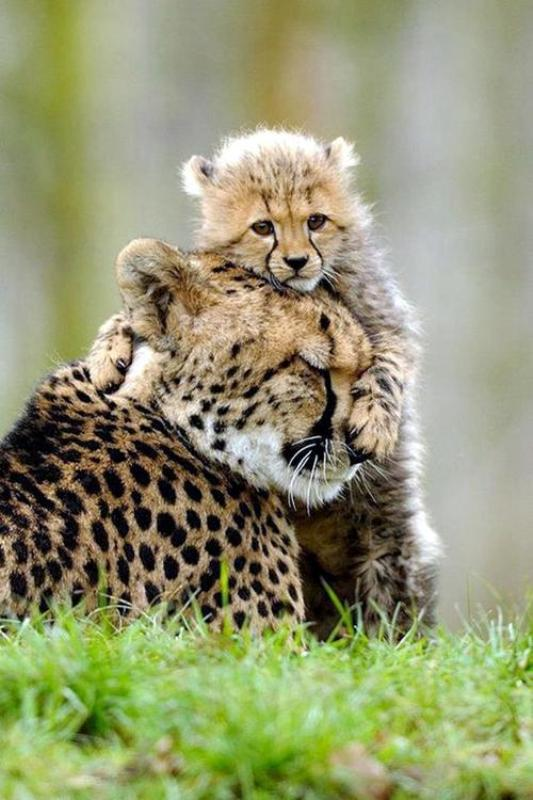 14 Heartwarming Photos of Animals Showing True Love Knows No Bounds