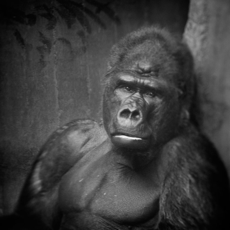 Looking Beyond the Glass: An Awakening Portrayal of Primates in Captivity (PHOTOS)