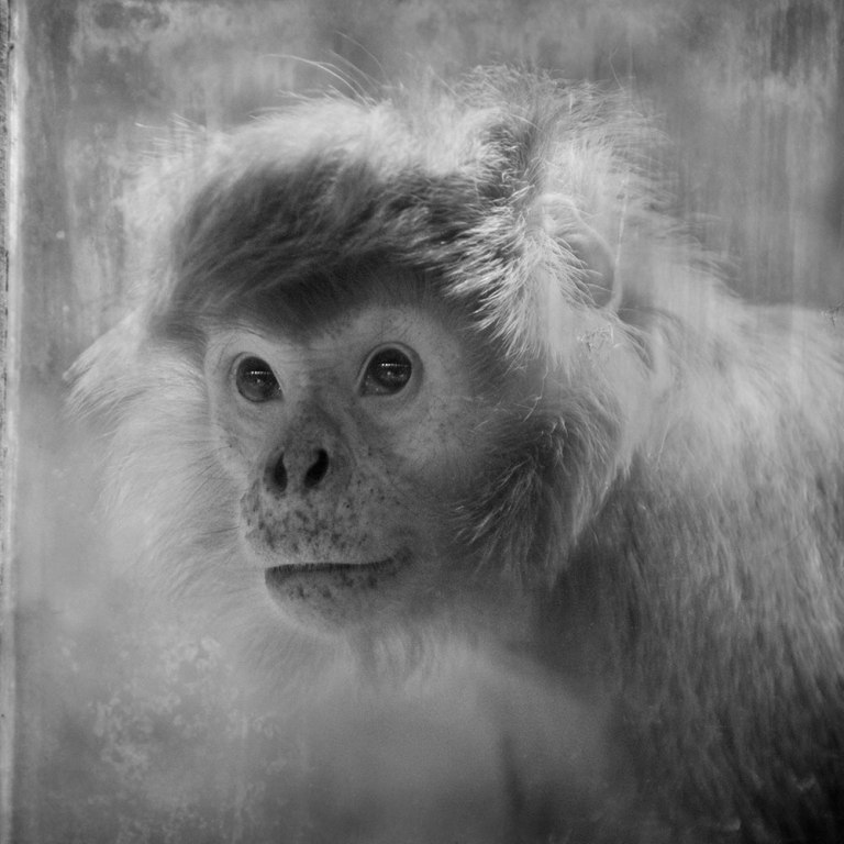 Looking Beyond the Glass: An Awakening Portrayal of Primates in Captivity (PHOTOS)Looking Beyond the Glass: An Awakening Portrayal of Primates in Captivity (PHOTOS)