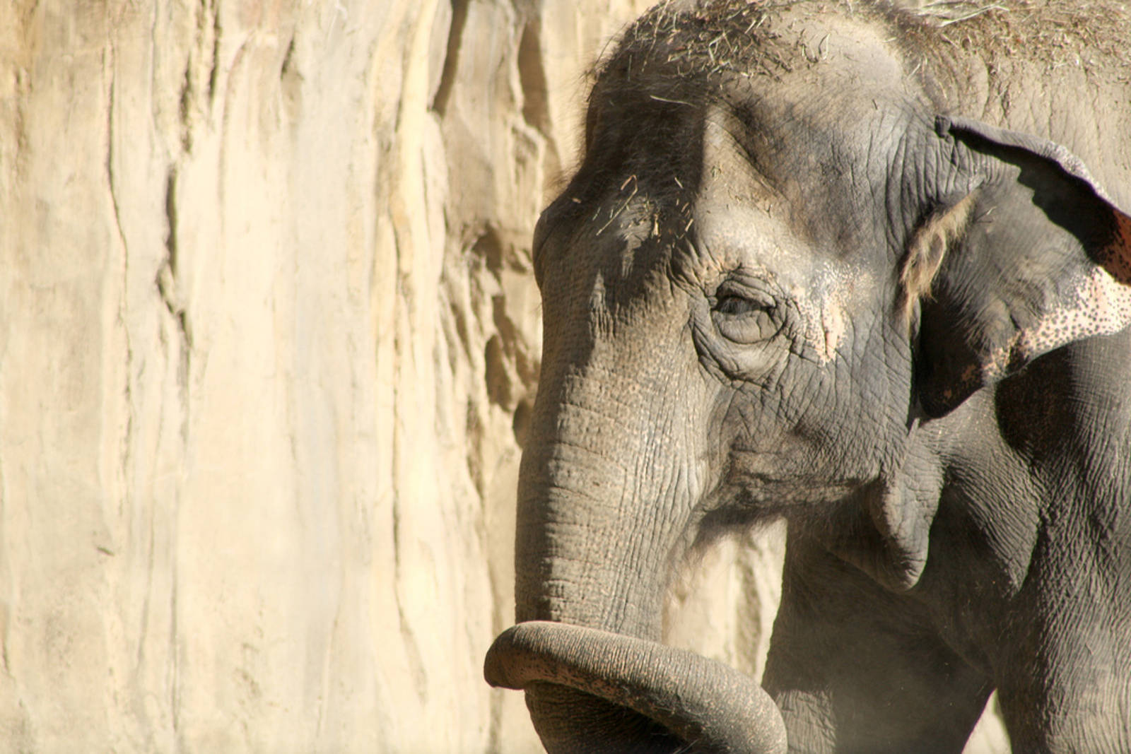 The Stories of 4 Elephants in Captivity – and How You Can Help