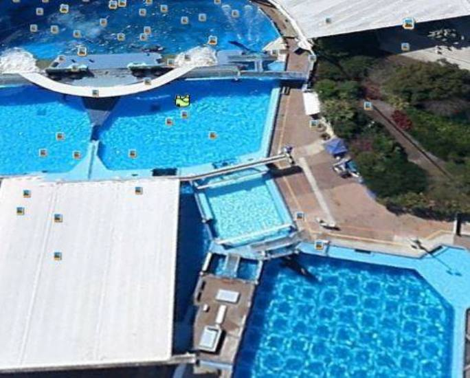 The Lonely Life of Tilikum: Six Tons of Killer-Whale Power Incarcerated, Subdued