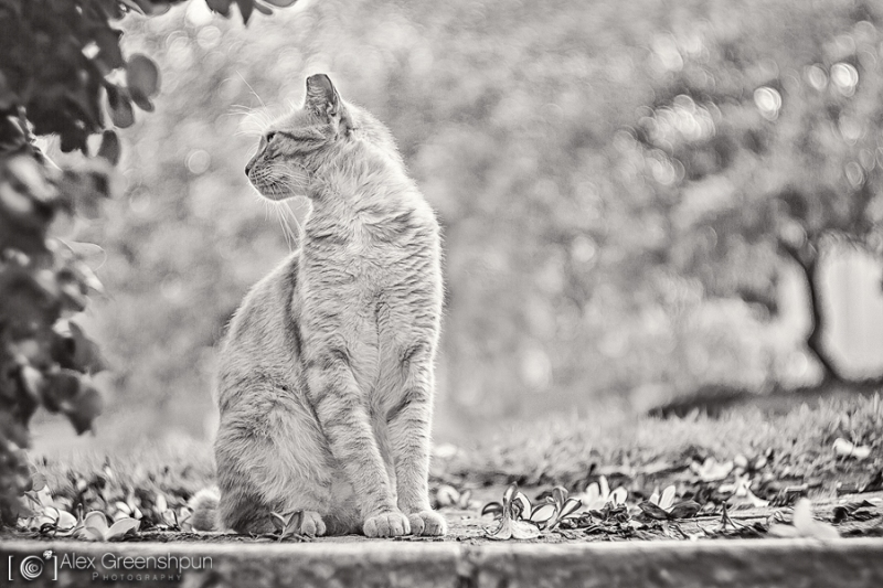 These Beautiful Photos Will Make You See Stray Cats in Whole New Light