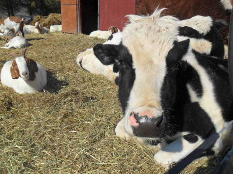 22 Beautiful Photos of Farm Animals Living Out Their Lives in Peace at Farm Sanctuaries