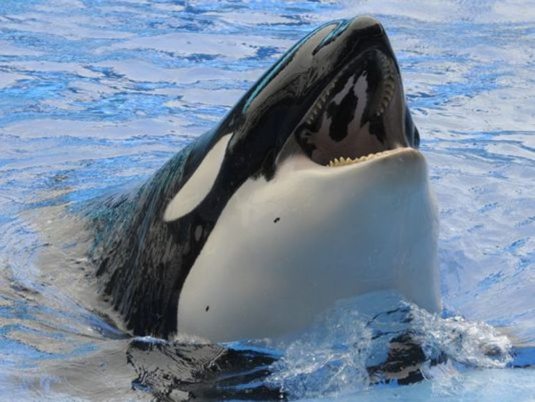 10 Things Dolphins and Orcas Would Tell Us About Life in Captivity