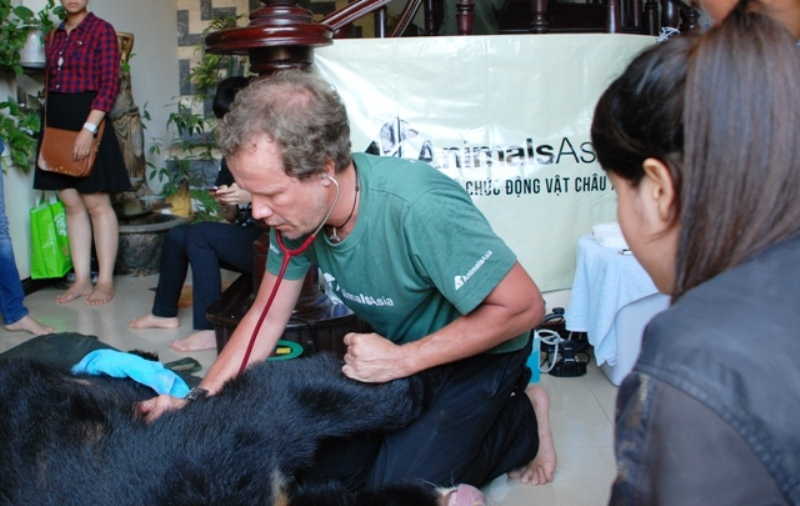 Moon Bear Ti Map Finally Free After Spending 14 Years at a Bear Bile Farm (PHOTOS)