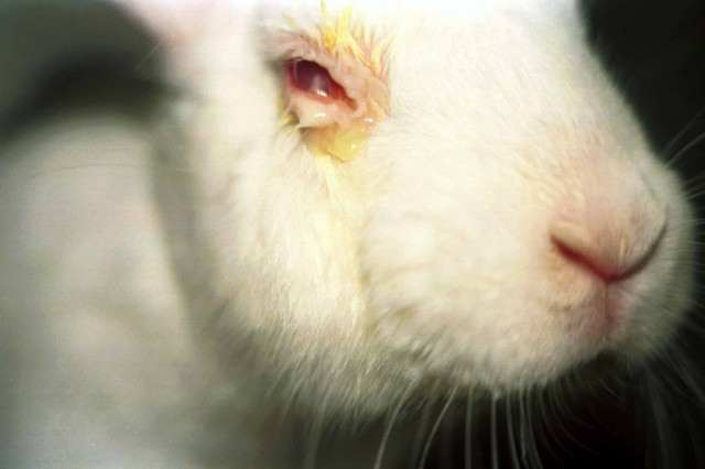 Undercover Investigations Prove We Need to Ban Cosmetic Testing on Animals