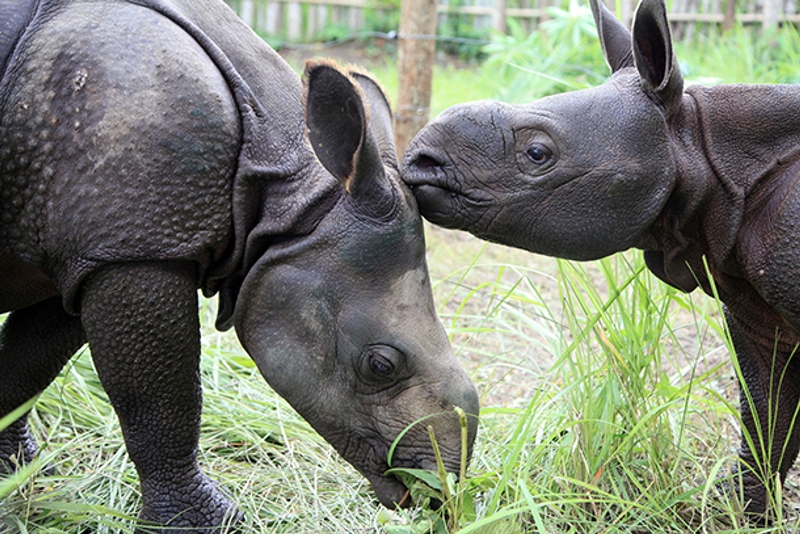 Despite Their Misfortunes, Two Orphaned Rhinos Form a Strong Bond in India