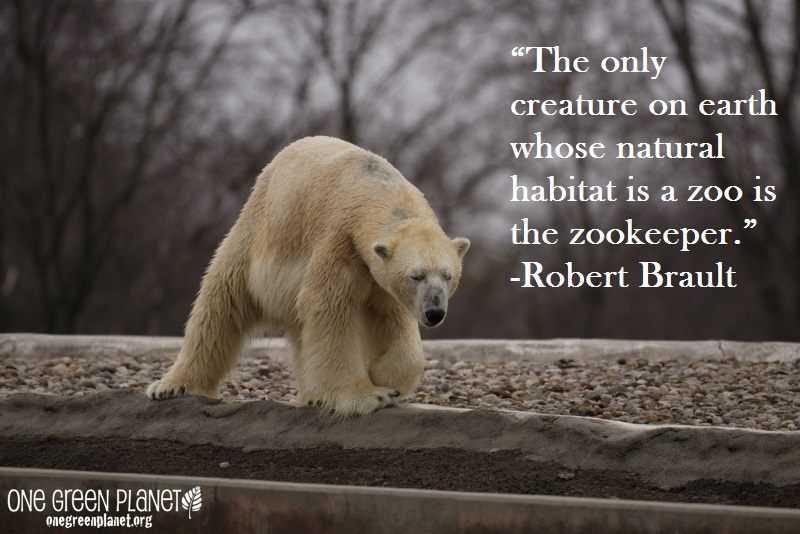 14 Quotes Every Animal Advocate Should Know By Heart - One ...