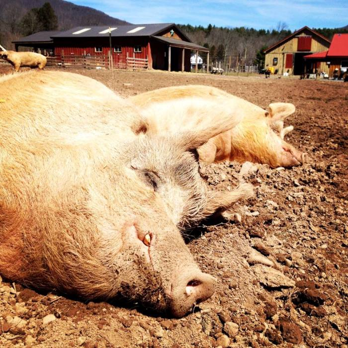 18 Photos that Prove Farm Animals are Someone Not Something