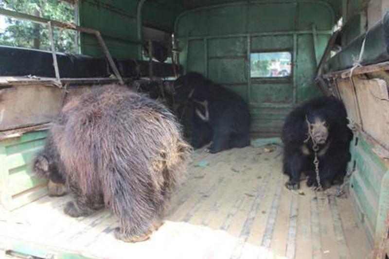 3 Bears 1