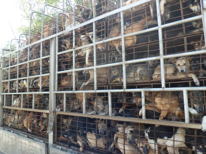 There Is Hope for the Victims of the Vietnam Dog Meat Trade