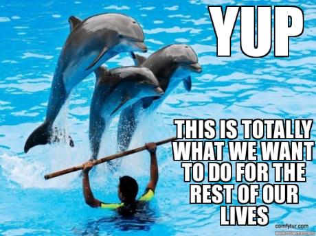 Dolphin Meme 1