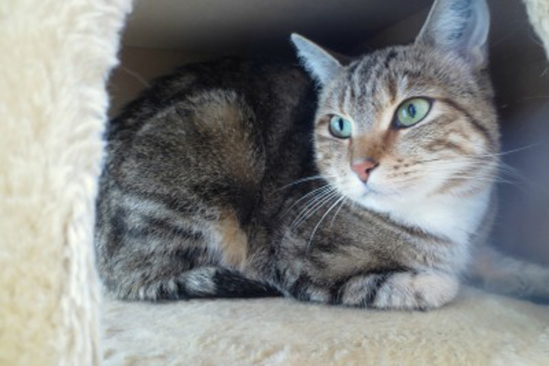 Kindness Ranch Launches Kitty Palace for Former Lab Cats