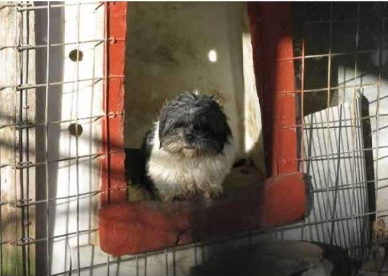 Where We've Come and Where We're Going: The State of Puppy Mills in the U.S.