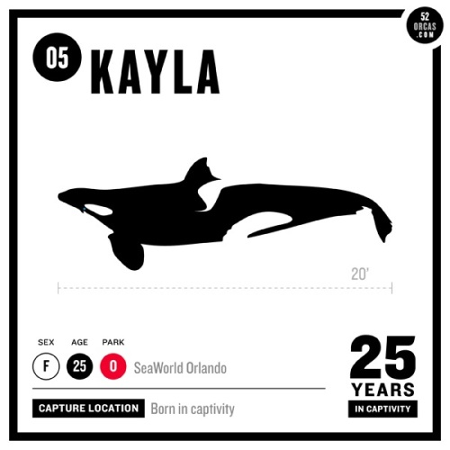 Stunning Advocacy Project Aims to Profile All Orcas Held Captive in Marine Parks (PHOTOS)