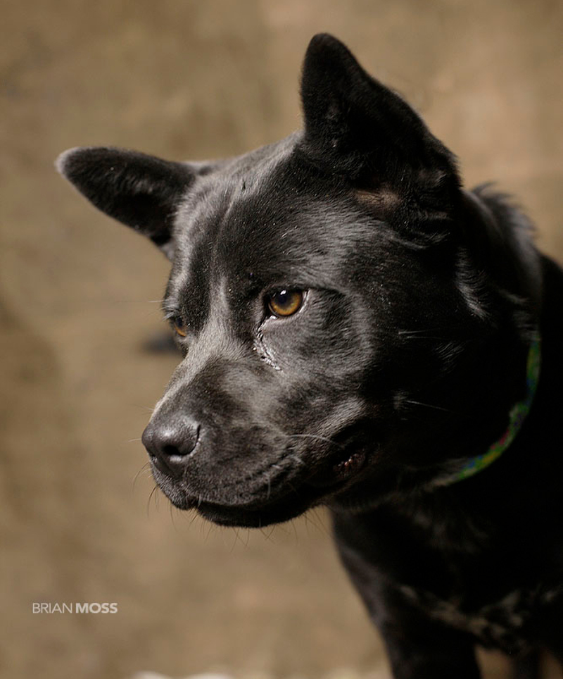 Photographer Captures Beautiful Portraits of Animals Looking for Forever Homes